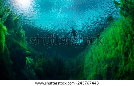 Freediver swimming in freshwater ponds at Piccaninnie ponds conservation park, South Australia - stock photo