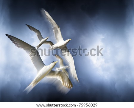 Freedom Is Represented By The Motion Movement And Graceful Flight Of Birds Soaring Or Flying High Above In The Cloudy Blue Sky Above - stock photo