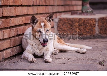 freedom life style look like stray dog - stock photo