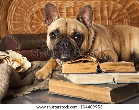 french bulldog and book - stock photo