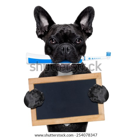 french bulldog dog holding electric toothbrush with mouth , holding a blank blackboard,isolated on white background - stock photo