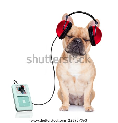 french bulldog dog listening music, while relaxing and enjoying the sound , isolated on white background - stock photo