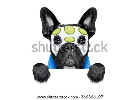 french bulldog dog relaxing  with beauty mask in   spa wellness center ,getting a facial treatment with  moisturizing cream mask and cucumber ,behind banner or placard, isolated on white background - stock photo