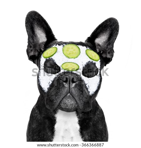 french bulldog dog relaxing  with beauty mask in   spa wellness center ,getting a facial treatment with  moisturizing cream mask and cucumber ,sleeping  with closed eyes - stock photo