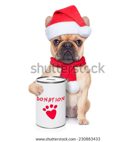 french bulldog dog with a donation can , collecting money for  charity, as a winter edition , isolated on white background - stock photo