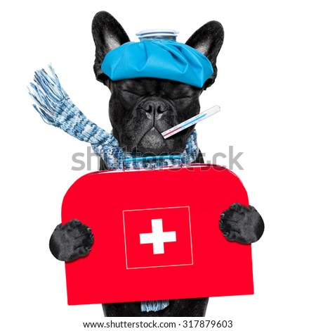 french bulldog dog  with  headache and hangover with ice bag or ice pack on head, eyes closed suffering ,holding a first aid kit isolated on white background - stock photo