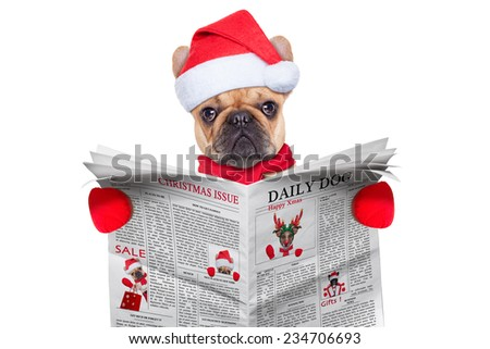french bulldog  dressed as santa reading the christmas issue on the newspaper, isolated on white background - stock photo