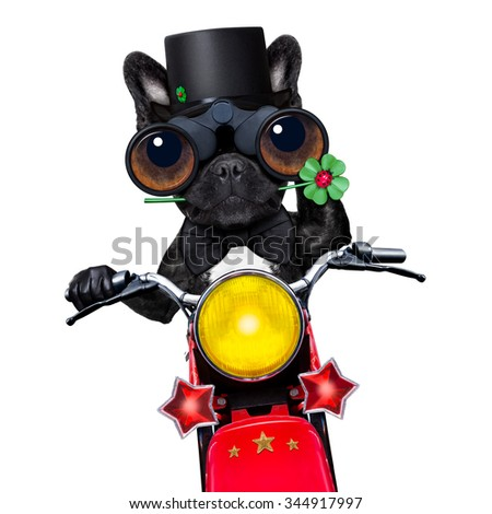 french bulldog driving a motor bike wishing you good luck for new years eve, isolated on white background - stock photo