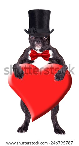 French bulldog in a black top hat with a heart in his paws - stock photo