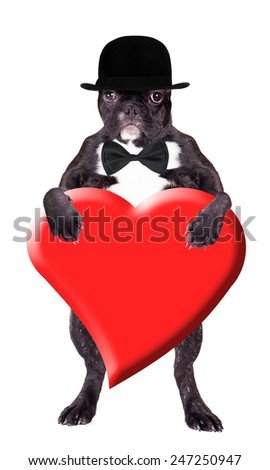 French bulldog in a bowler hat with heart in his paws - stock photo