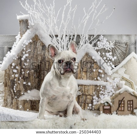 French Bulldog in front of a Christmas scenery - stock photo