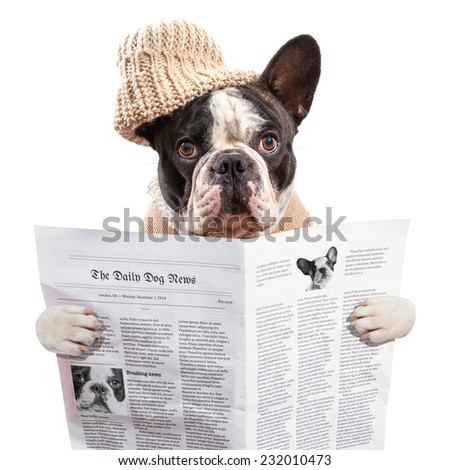 French bulldog in hat reading newspaper over white - stock photo