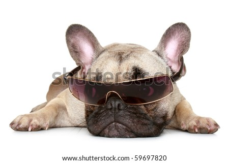 French bulldog in sunglasses lies on a white background - stock photo