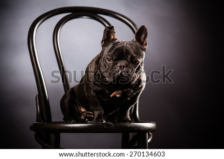 french bulldog on old chair - stock photo