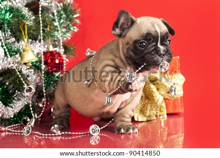 french bulldog puppy  and gifts christmas - stock photo
