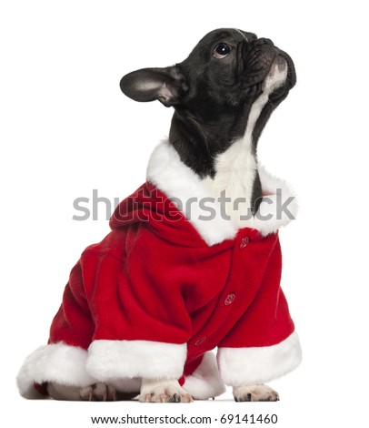 French bulldog puppy in Santa outfit, 4 and a half years old, sitting in front of white background - stock photo