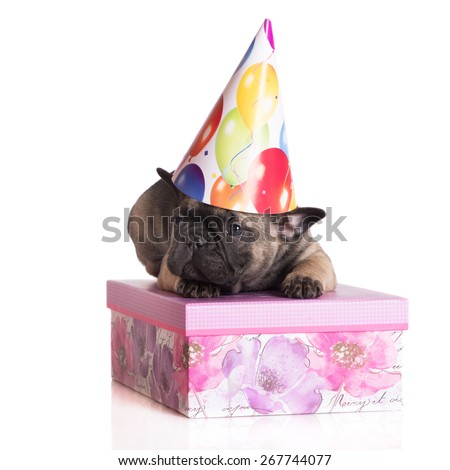 french bulldog puppy on a gift box - stock photo