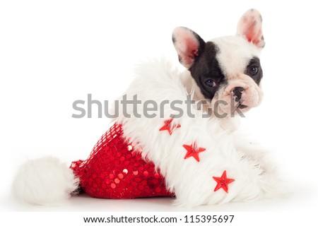 French Bulldog puppy sitting into christmas hat - stock photo