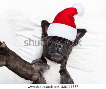 french bulldog santa claus dog taking a selfie in bed at christmas holidays  wearing a red hat - stock photo