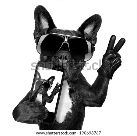 french bulldog  taking a selfie with cool fancy sunglasses - stock photo