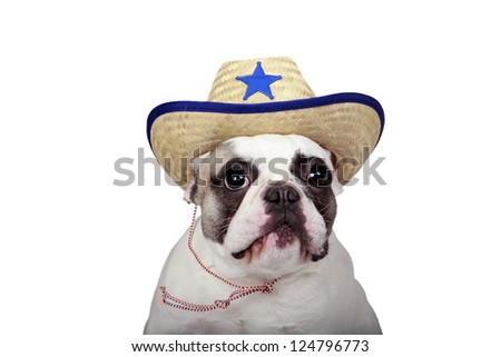 French Bulldog wearing a Sheriff Hat.  Isolated on a white background. - stock photo
