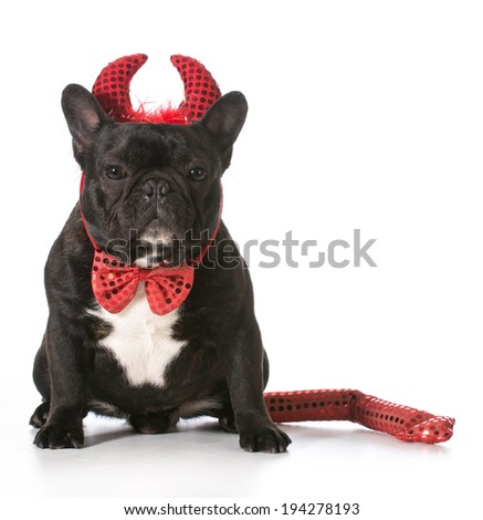 french bulldog wearing devil costume - stock photo