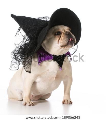 french bulldog wearing witch costume - stock photo