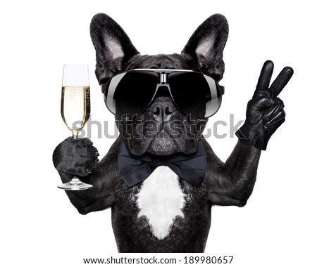 french bulldog with a  champagne glass and victory or peace fingers - stock photo