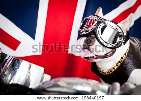 French bulldog with goggles, gold chain and leather coat on scooter in front of British flag - stock photo