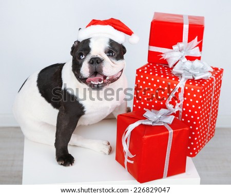 French bulldog with Santa hat and presents on sofa in room - stock photo