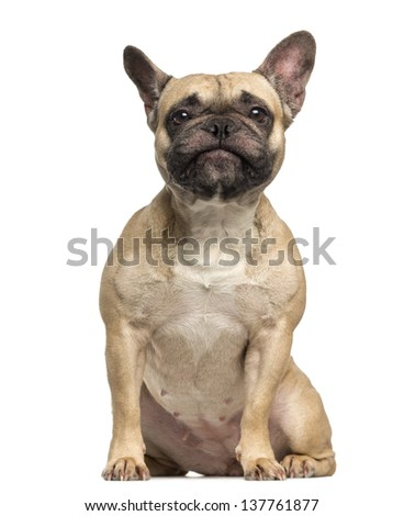 French Bulldog, 3 years old, sitting and making a face, isolated on white - stock photo