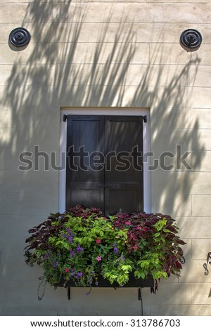 French style shutters with a large flower box and a stucco wall in Charleston South Carolina - stock photo
