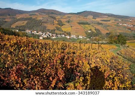 French village vineyard with autumn colours , beaujolais - stock photo