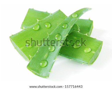Fresh aloe vera leaves with water drops isolated on white - stock photo
