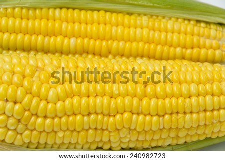 Fresh an ear of corn with green leaves - stock photo