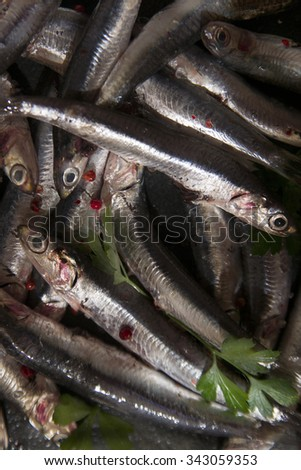 Fresh anchovies just fished in the Mediterranean Sea - stock photo