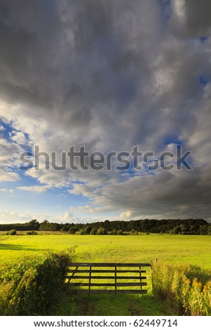 Fresh and bright green field in summer - stock photo