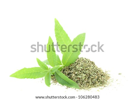 Fresh and dry verbena - stock photo