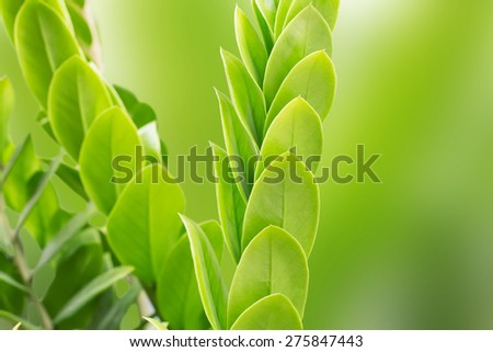 fresh and green leaves on a green background blur - stock photo