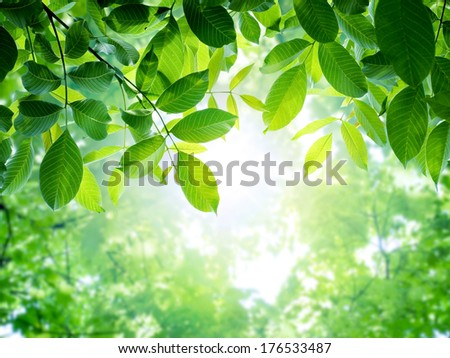 Fresh and green leaves. Spring background. - stock photo
