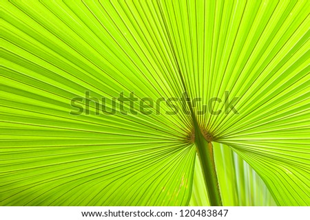 fresh and green palm leaves - stock photo