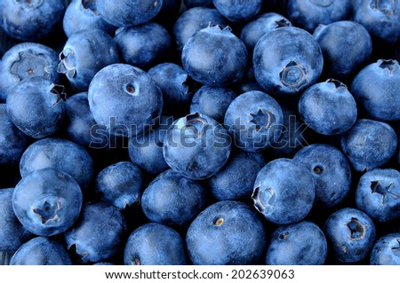 fresh and juicy blueberry - stock photo