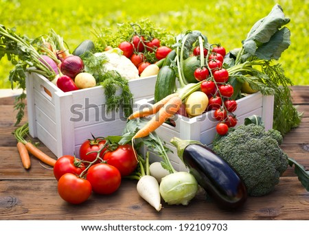 Fresh and organic vegetables in the garden - stock photo