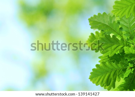 Fresh and young oak leaves in springtime - stock photo