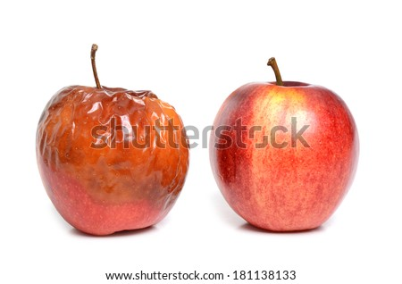 fresh apple and rotten apple on white background - stock photo