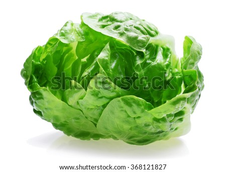fresh baby cos (lettuce) on white background - stock photo