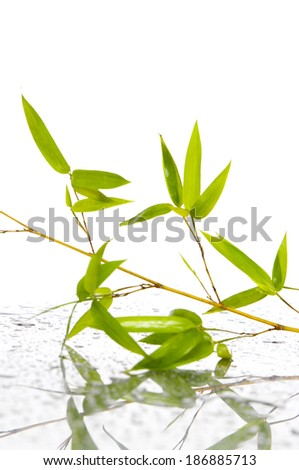 Fresh Bamboo - stock photo