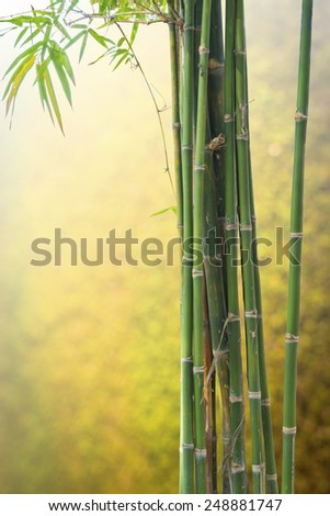 Fresh bamboo green on Blurred  background - stock photo