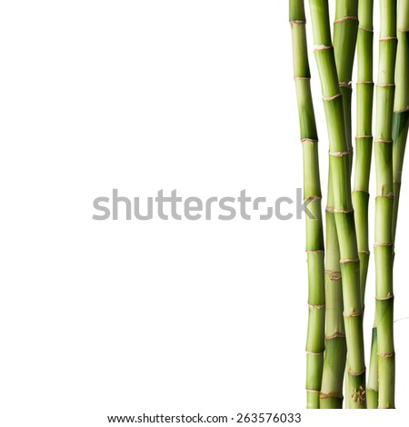 Fresh bamboo isolated on white background - stock photo