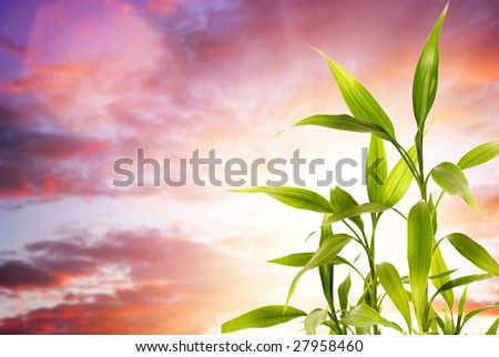 Fresh bamboo leaves over cloudy background - stock photo